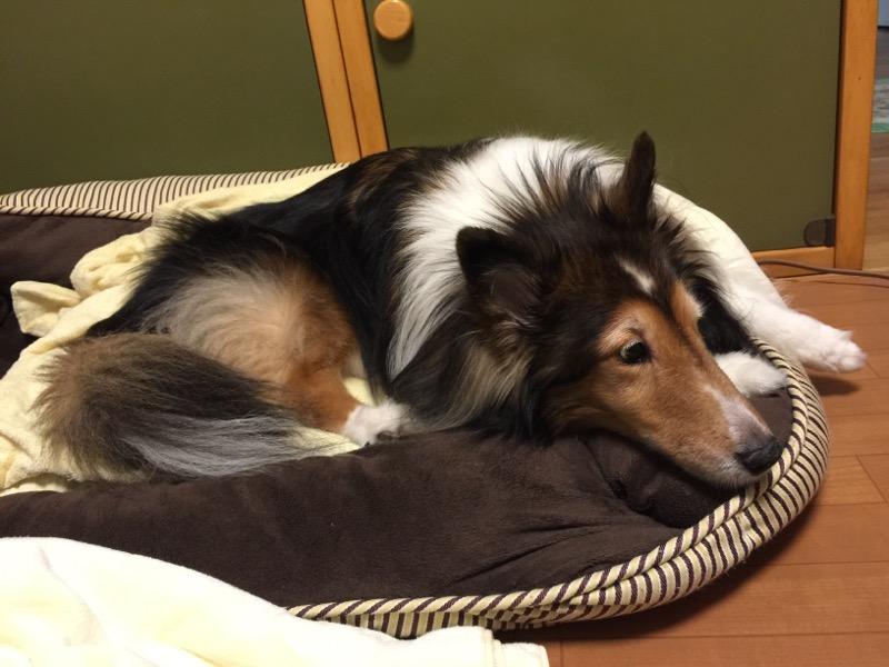 お気に入りの犬用スペース