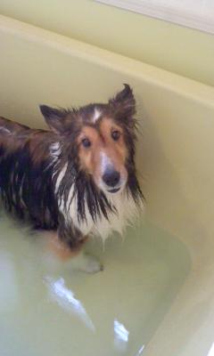 お風呂も大好き