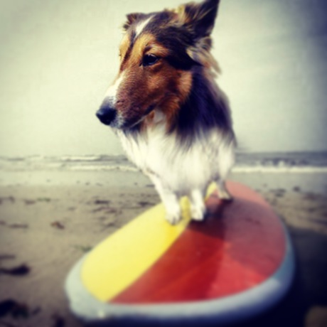 サーフィンにチャレンジ!