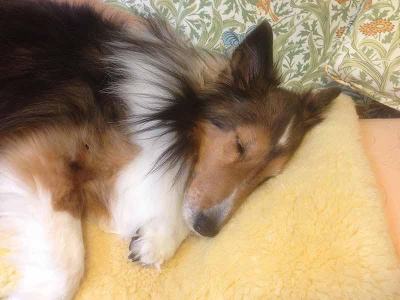 眠い時はお家でゆっくり寝ましょう