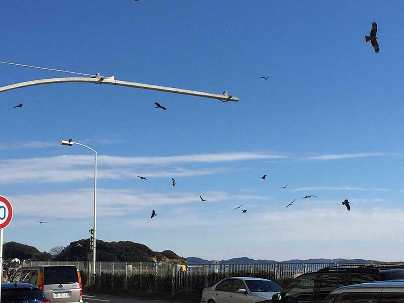 江ノ島界隈全部危険だったりします