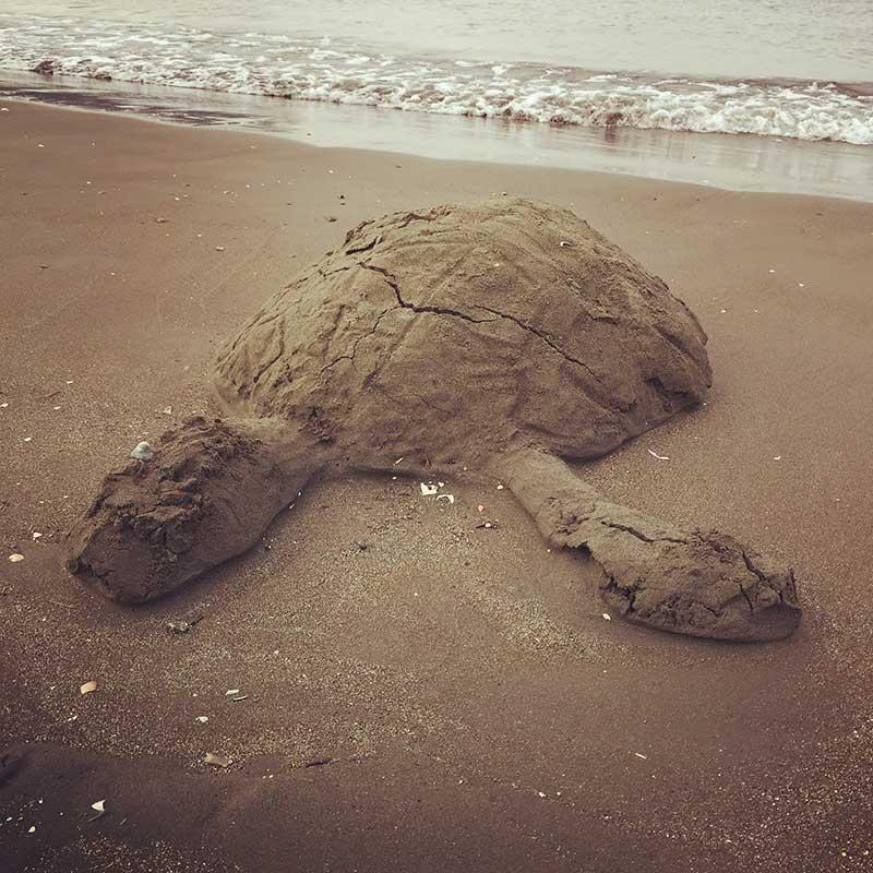 砂ウミガメ