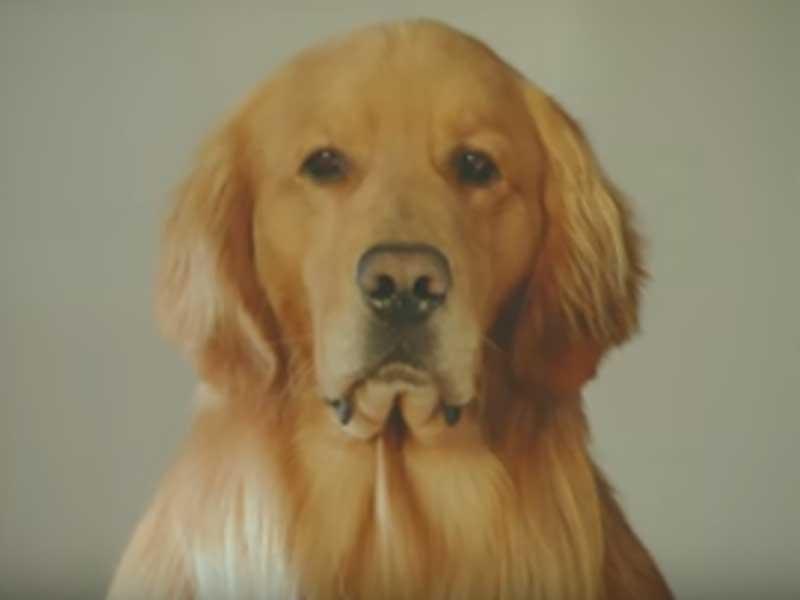 犬の表情が秀逸