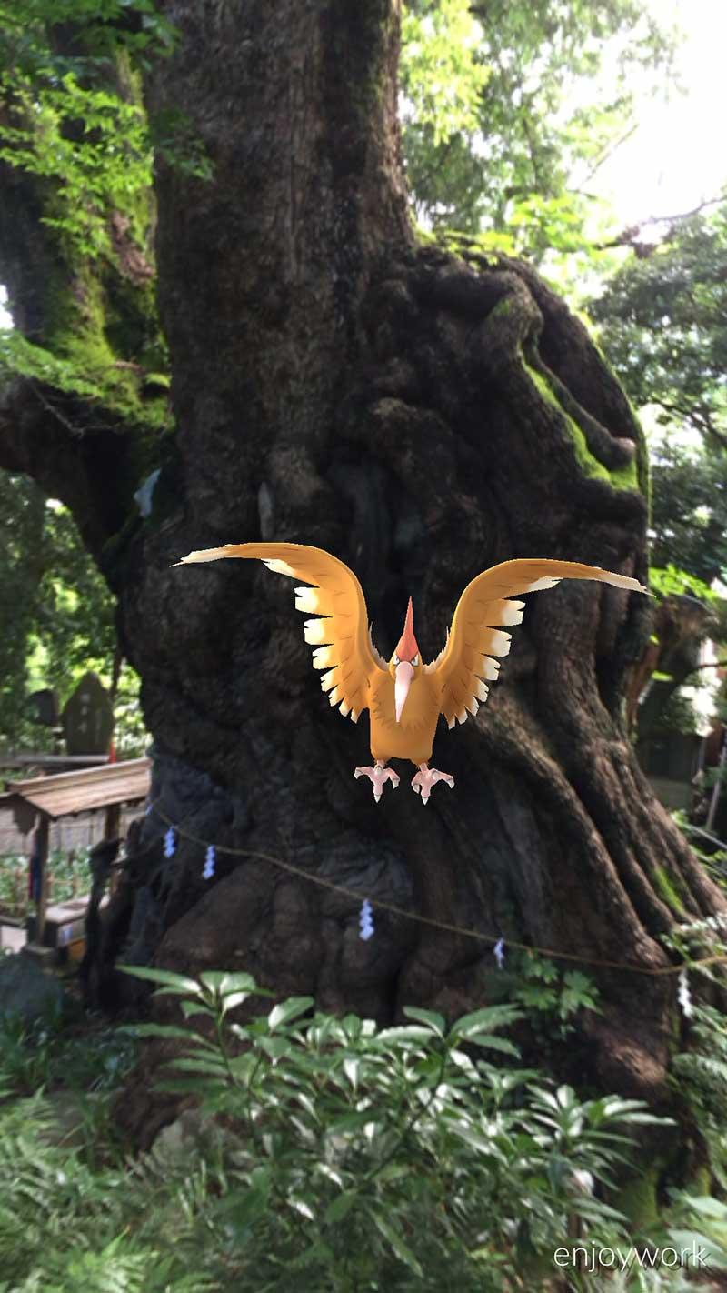 大楠を護る御神獣なのでしょうか
