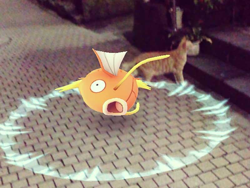 ネコも迷惑な江ノ島ポケモンGO人気