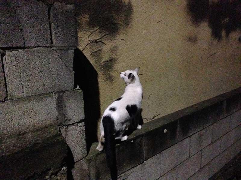 ネコもびっくりだにゃー