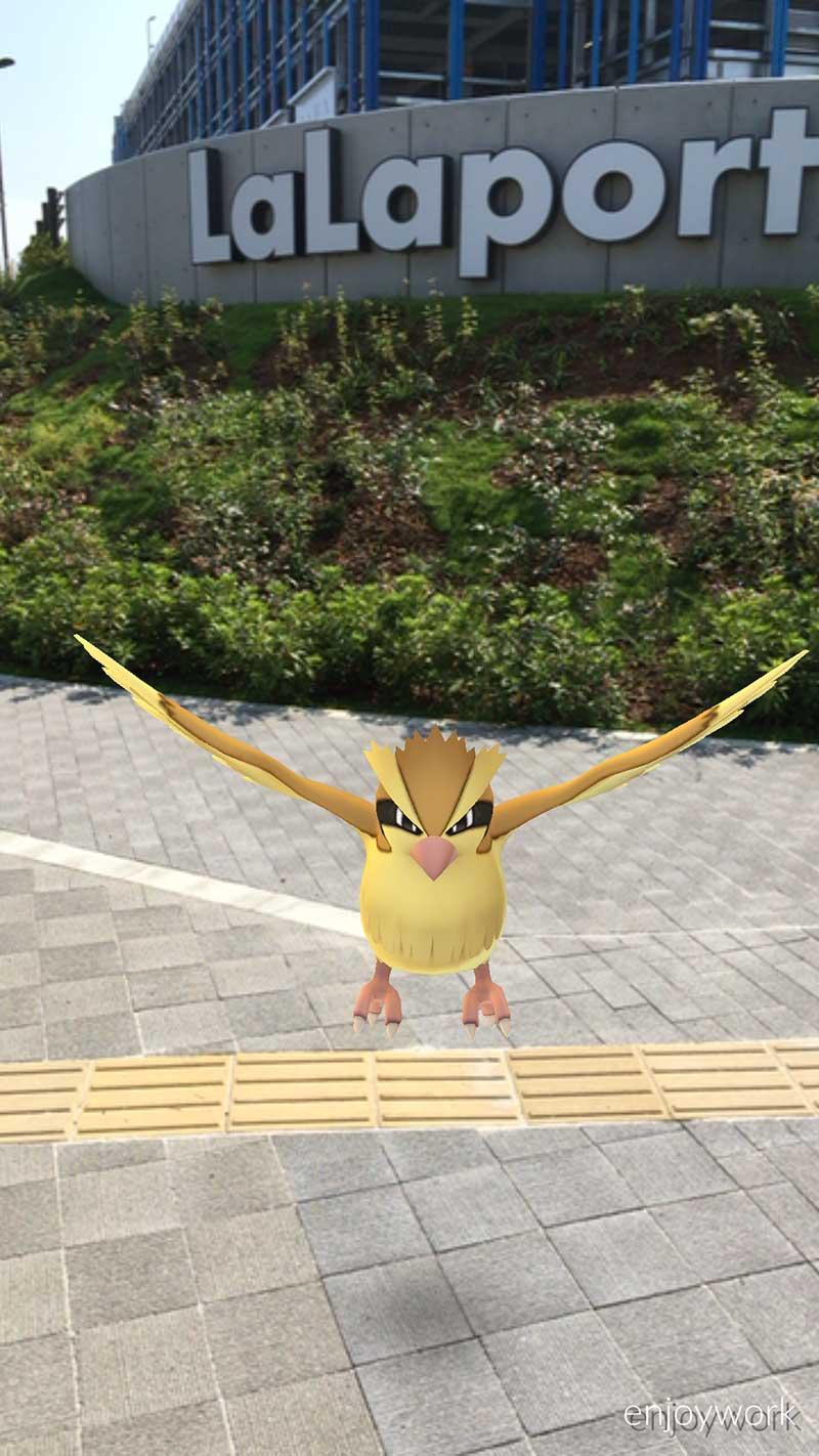 いつもの鳥や