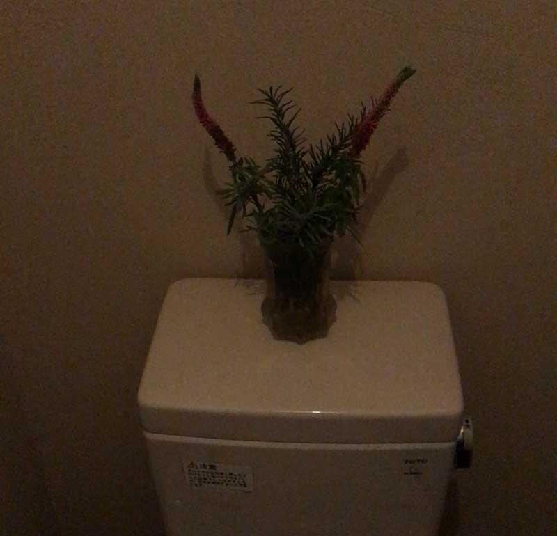 トイレも落ち着くわー