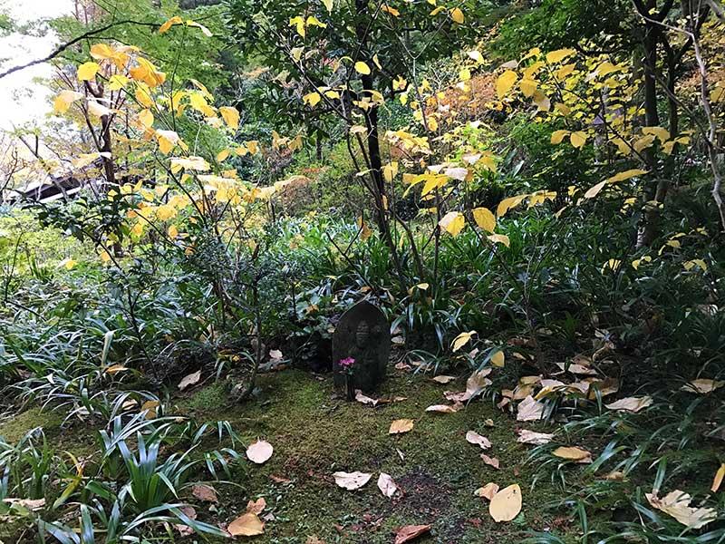 このあたりは葉が散っています