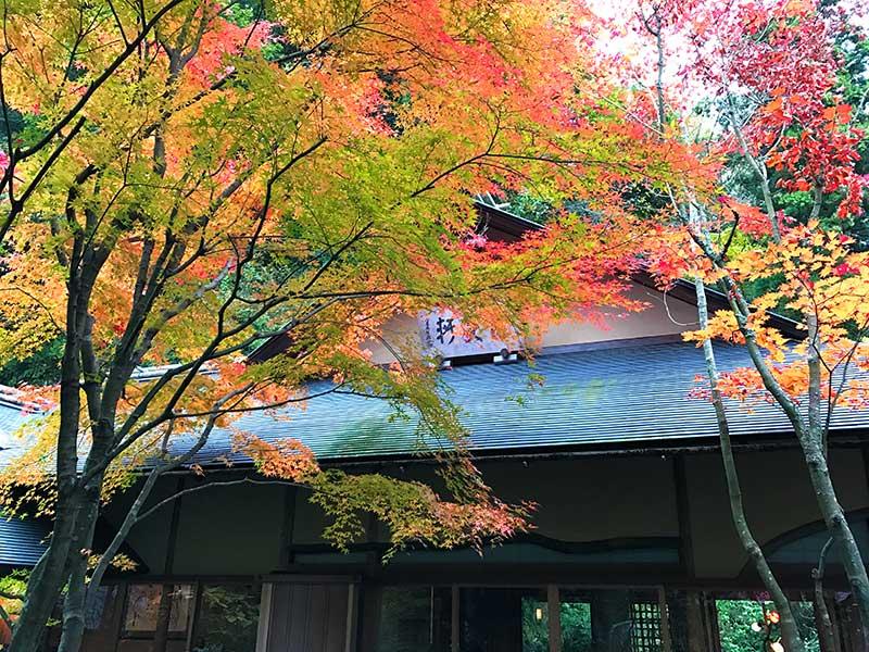 【北鎌倉のおすすめ紅葉名所】開始時期は?「明月院」がうっすら色付いて来ました