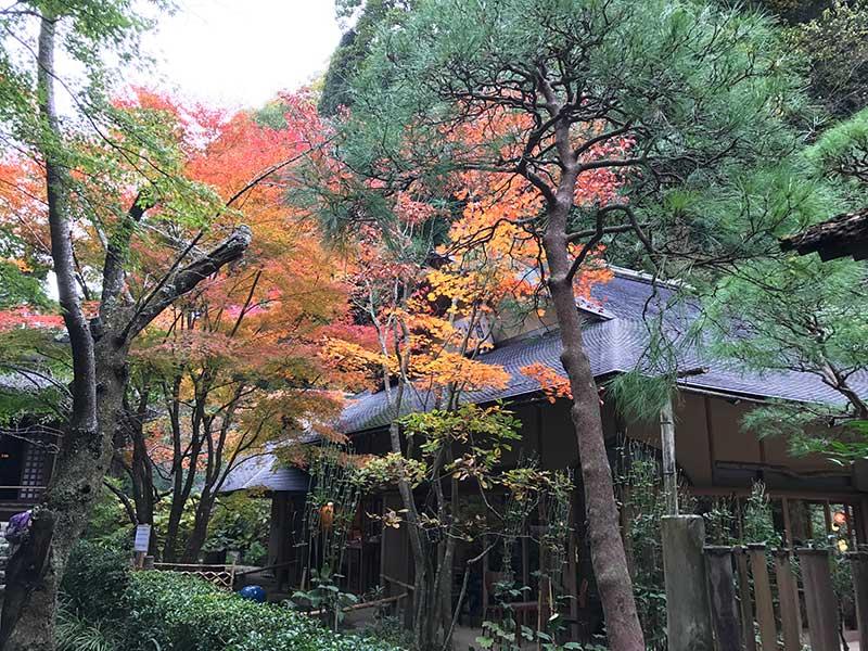 日本家屋と赤い紅葉が、合う!