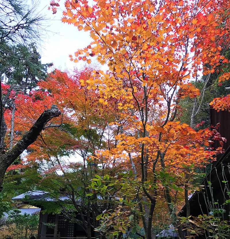 こんなに素敵な紅葉が始まっています