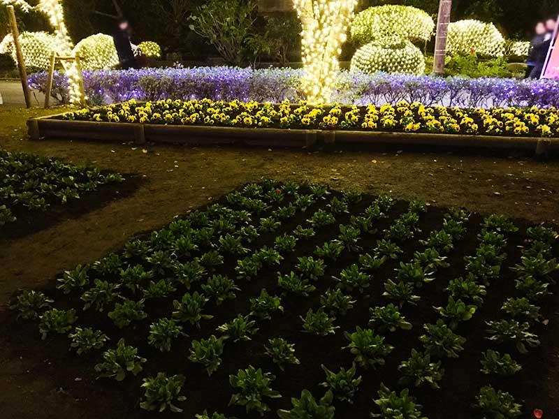 草花もライトアップ