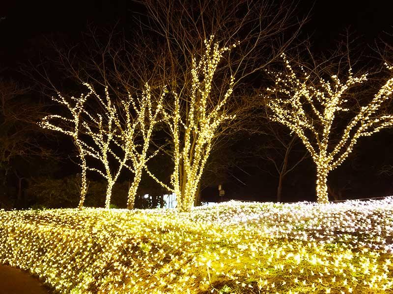 光のお花畑