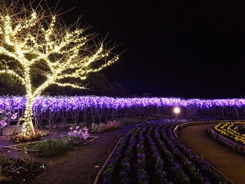 紫色の花畑が幻想的
