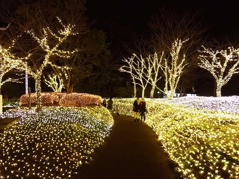 光のお花畑の道