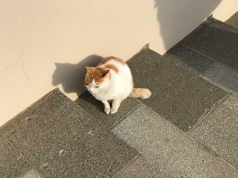 江ノ島ネコの誘惑