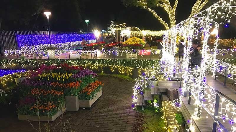 色とりどりの花と植物
