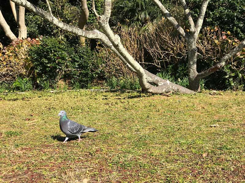 鳩や小鳥もくつろぐ場