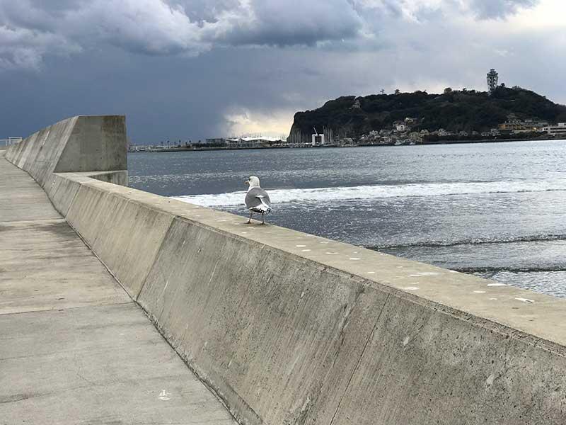 カモメと江ノ島
