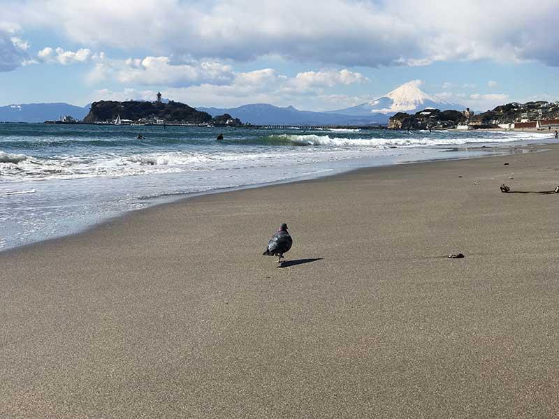 鎌倉高校前の海岸からトコトコ歩きます