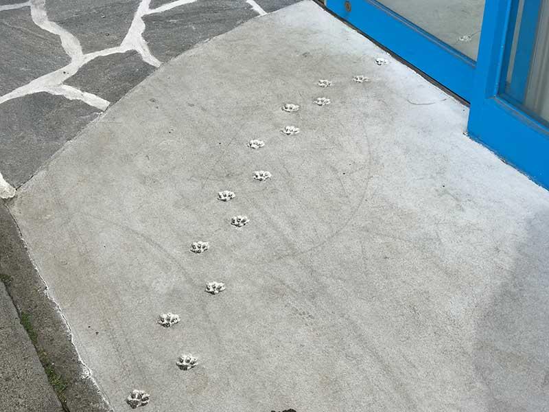 猫の足跡がてんてんと