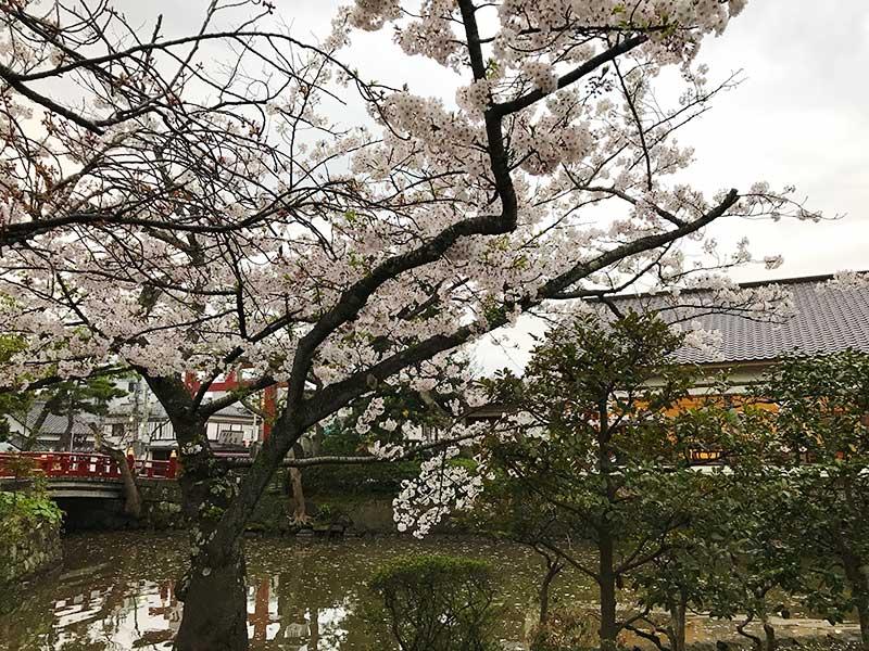 静かに桜を楽しみたい方向け