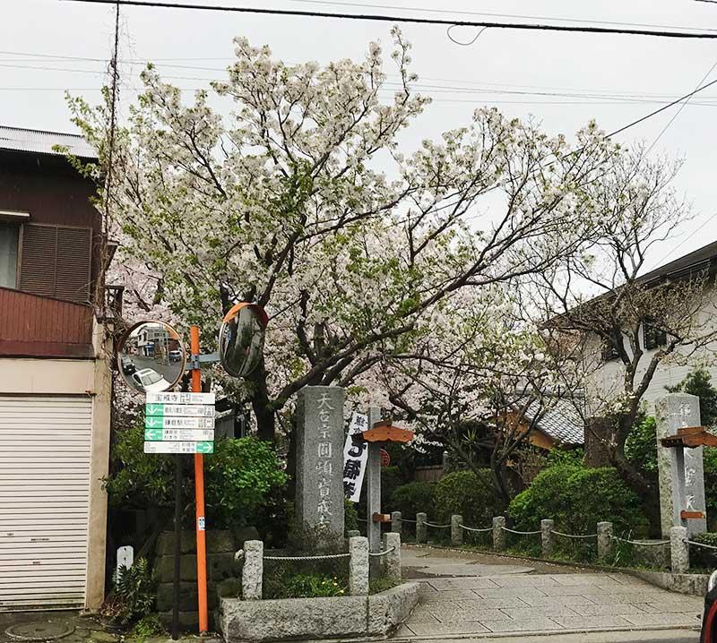 葉桜も目立つ