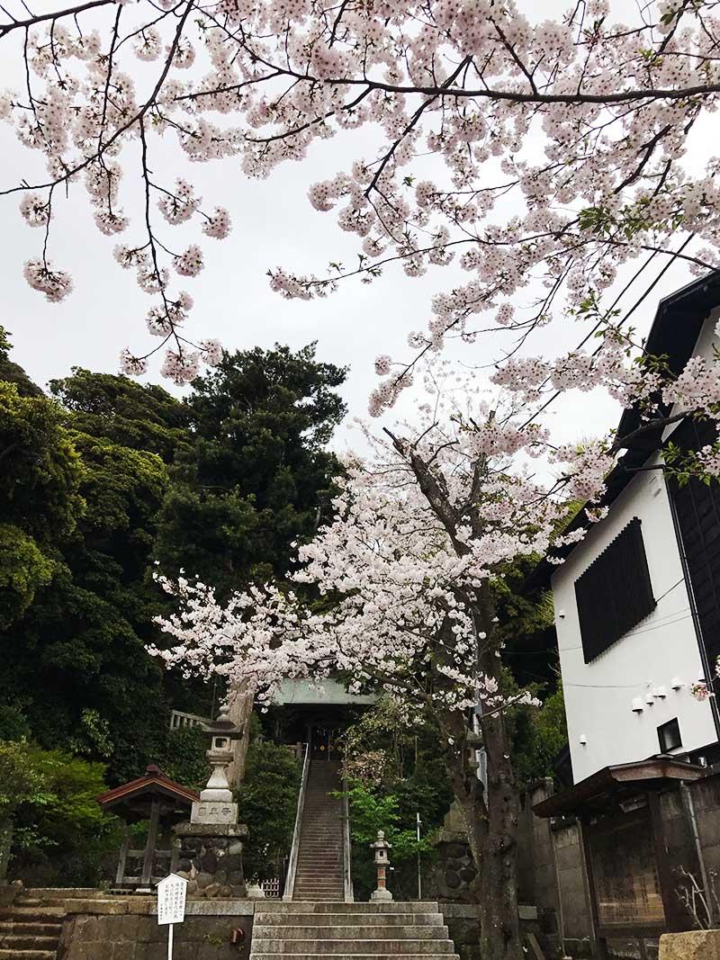 山門の手前に桜が
