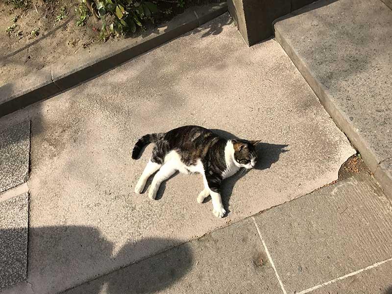 石段で寝転ぶ猫
