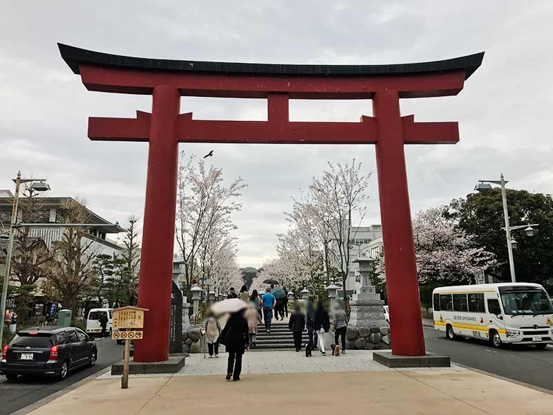 鶴岡八幡宮の段葛の桜