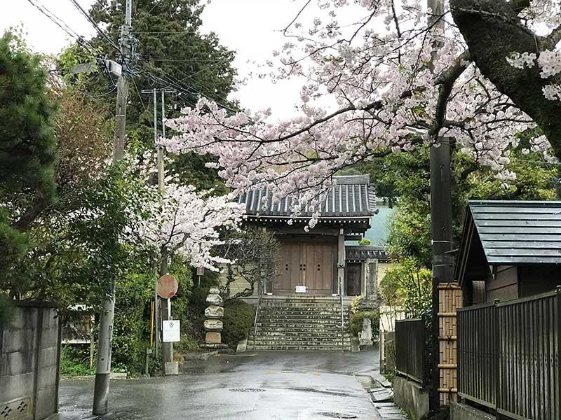 山門までを桜がお出迎え