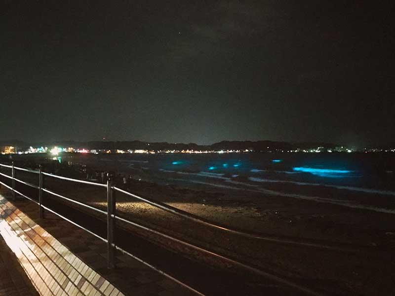 鎌倉の夜光虫は今晩は見えるの?
