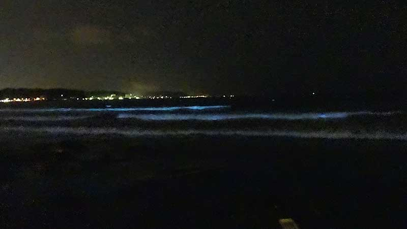 白波にまみれて光る夜光虫