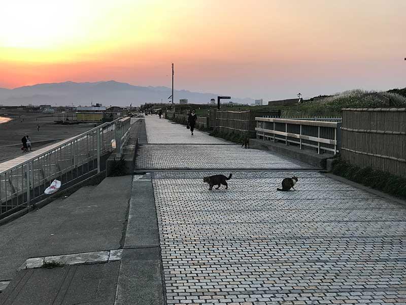 夕日を眺めながら井戸端会議