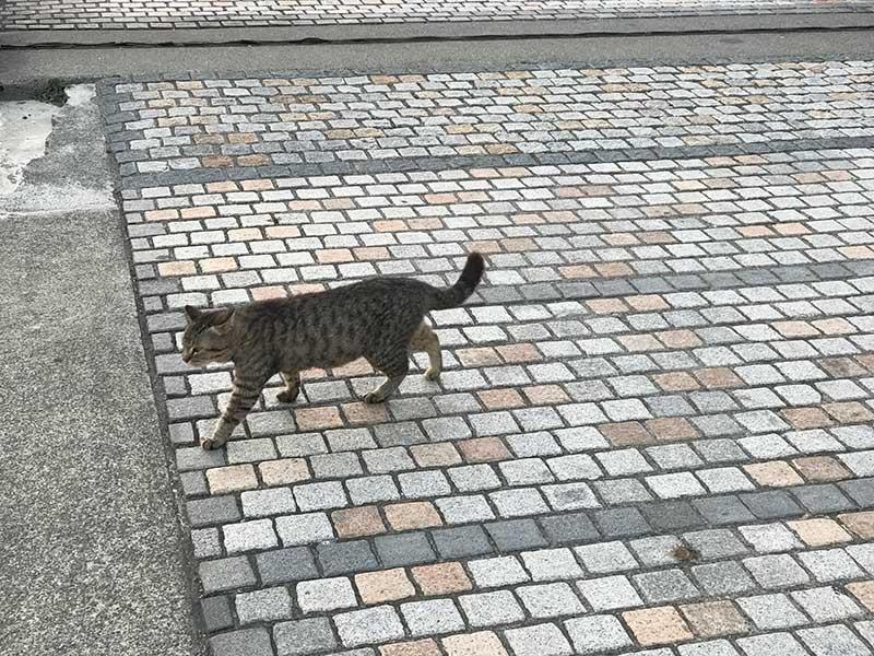 猫もまったり
