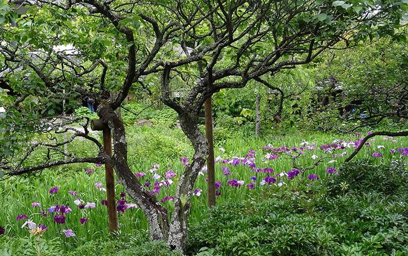 特等席から見た白蓮舎の庭