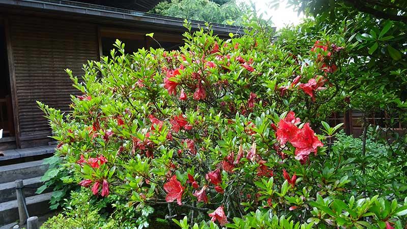夏らしい赤い花