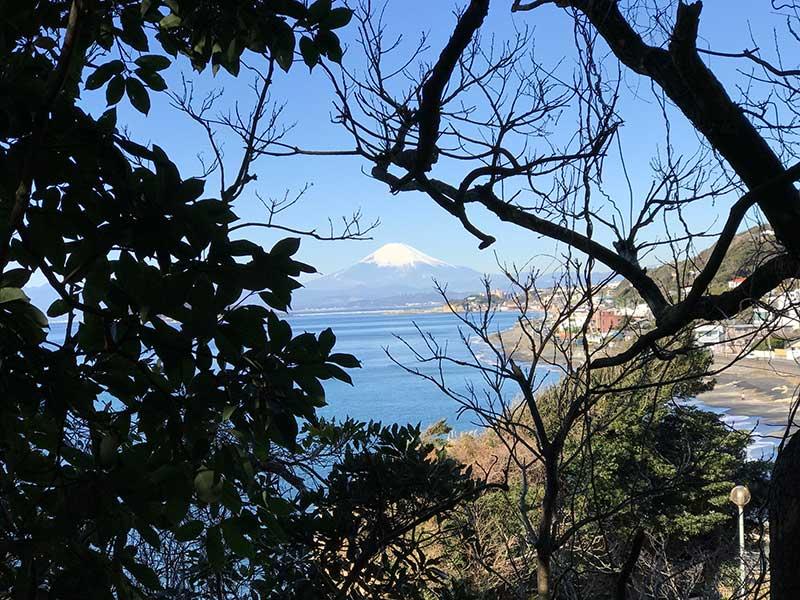 木々の間から富士山をパチリ