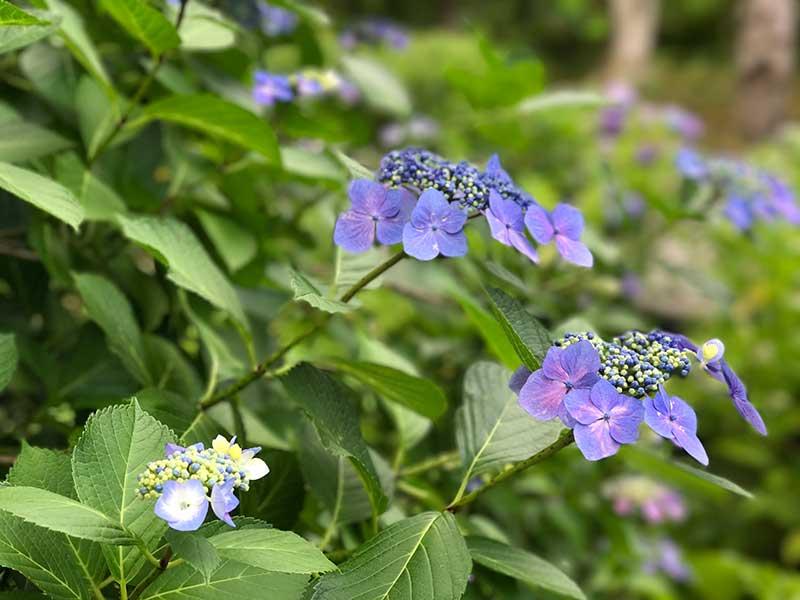 小さくて可愛らしい花です