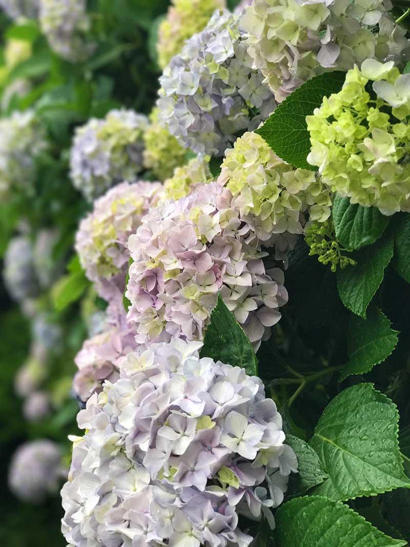 近くに寄ると雨と花の香りが