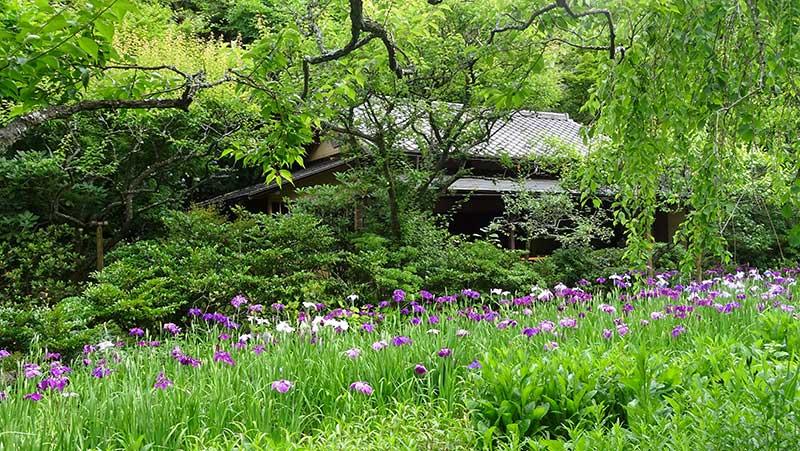 草花に囲まれた白蓮舎