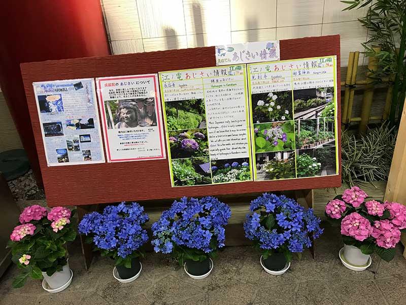 駅で紫陽花の開花状況を告知