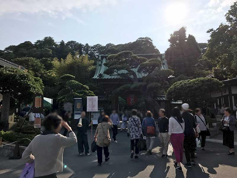長谷寺は紫陽花人気で混雑地獄