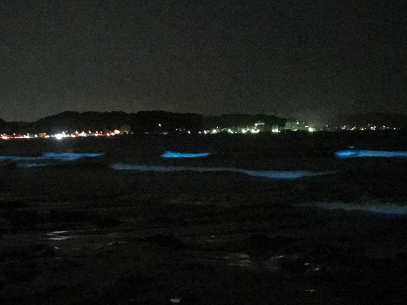 浜辺付近まで迫る夜光虫の青い光