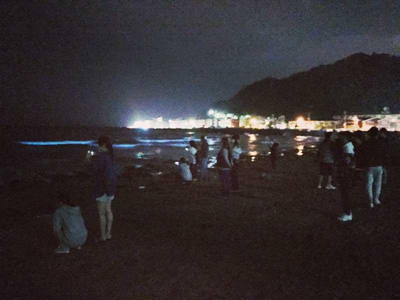 夜は夜光虫で人気の由比ヶ浜