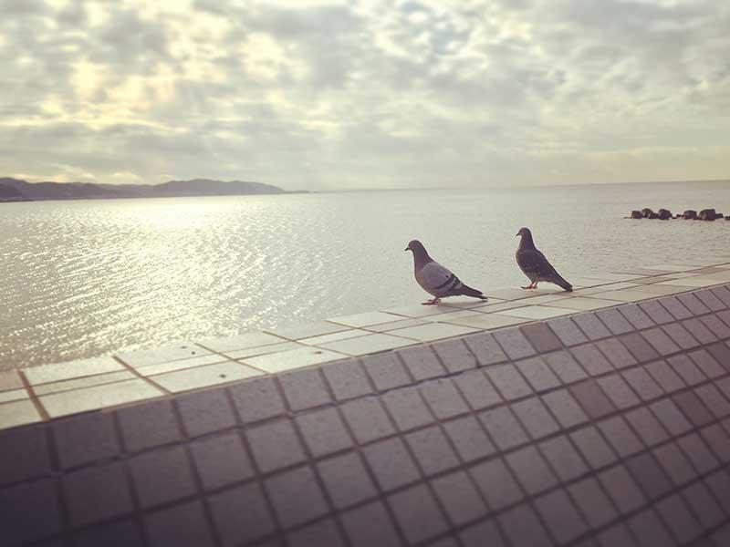 鳩も海を眺めに来る