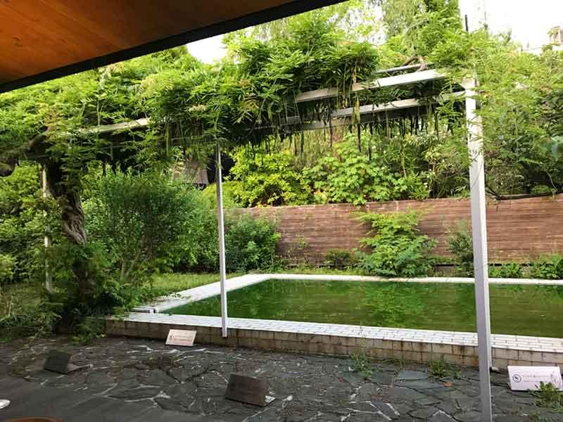 中庭に木々とプールが!