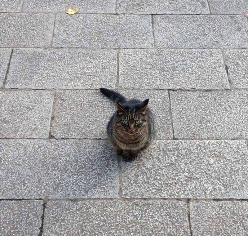 この子は飼い猫かな?