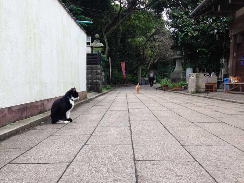 そこいら中を闊歩する猫たち